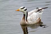 Nepal Winter Birding Terai Tour
