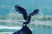 Himalayan Bird Watching Tour