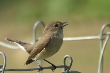 Shivapuri Birding Tour