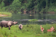 Wildlife Safari Chitwan National Park