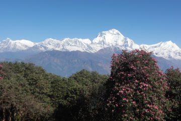 Dhaulagiri High Himalaya Trekking