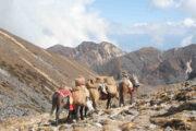 Black Mountain Trekking