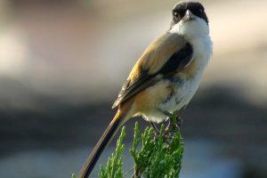 Winter Birding Terai Tour