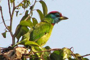 Langtang Helambu Birding Tour