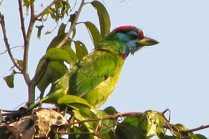 The Shivapuri Watershed and Wildlife Reserve