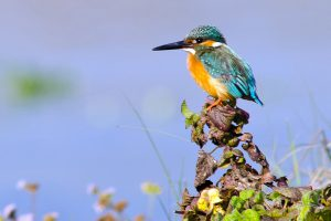 Birds of the Kathmandu Valley