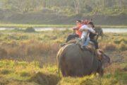 elephant in chitwan national park