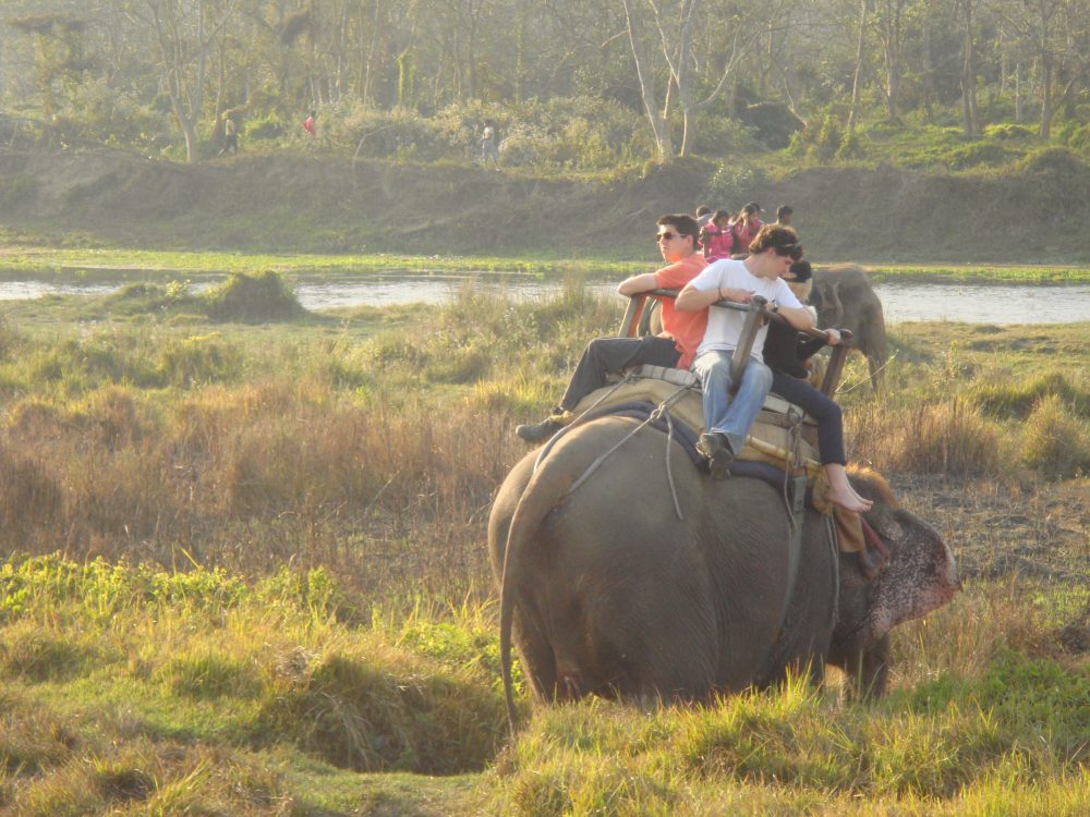 elephant in chitwan national park