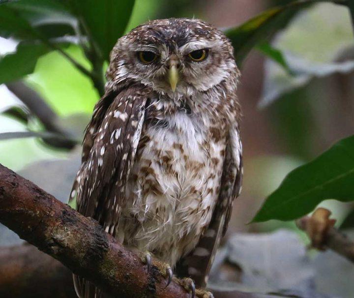 Koshi Tappu Wildlife