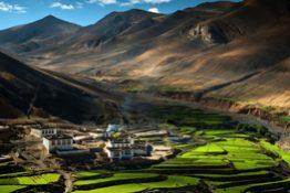 cat-tour-tibet