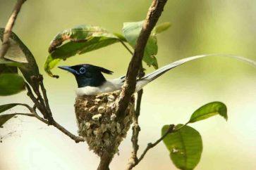 Nepal bird watching tour
